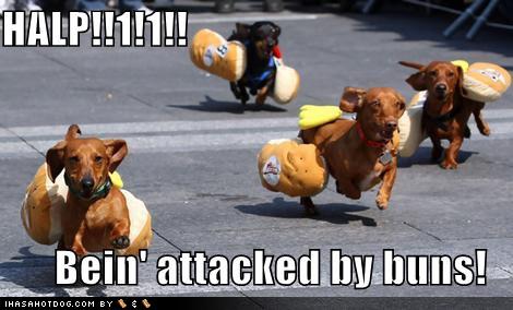 Weiner dogs 3