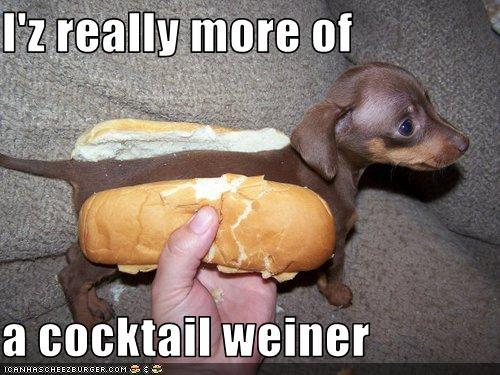 Weiner dogs 2