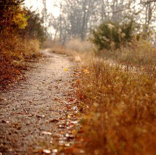 Newt trail 2