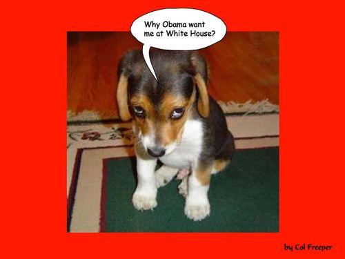ObamaEatPuppy